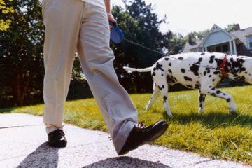 Cách mà thú cưng cải thiện sức khỏe của bạn