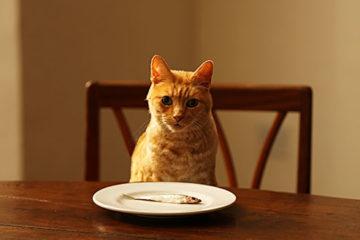 Thức ăn nào của người phù hợp cho mèo ?