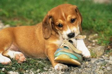 Những sai lầm bạn mắc phải khi có một chú thú cưng ( Phần I )