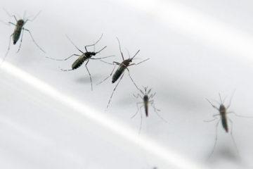 Làm gì khi dịch sốt xuất huyết có diễn biến phức tạp ?