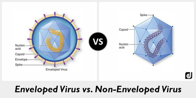 Virus-co-vo-va-virus-khong-co-vo