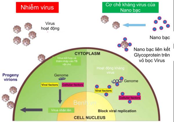 Co-che-khang-virus-cua-nuoc-suc-mieng-nano-bac-plasma