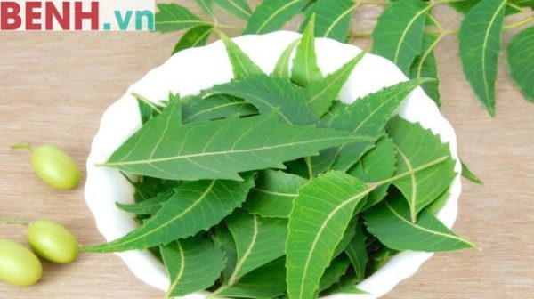 phuong-phap-duoi-muoi-bang-dau-neem-04
