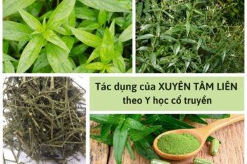 tac_dung_xuyen_tam_lien